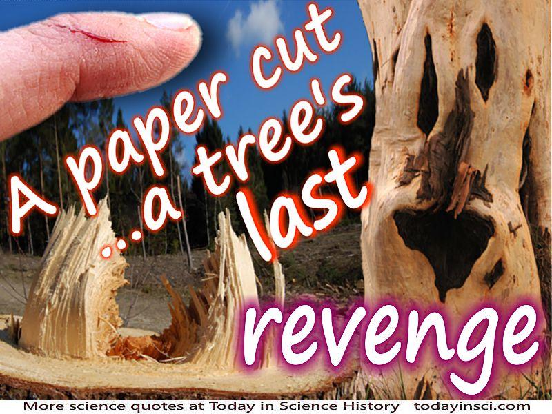 Anonymous quote A Paper Cut… A Tree's Last Revenge