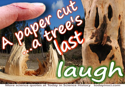 Anonymous quote A Paper Cut� A Tree's Last Laugh