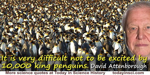 David Attenborough quote: It is very difficult not to be excited by 10,000 king penguins.