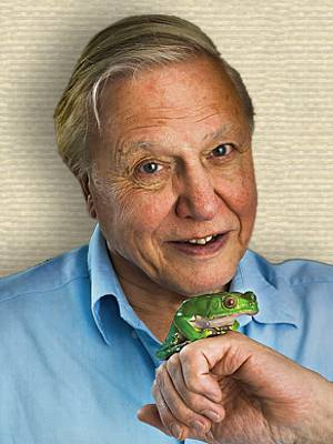 Photo of David Attenborough, head and shoulders facing forward, with frog on back of fist held in foreground