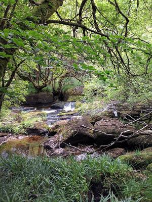Photo Dartmoor, England, of small stream running between moss-covered boulders under leafy canopy of small trees, public domain