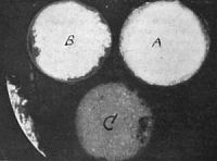 Phosphorescence caused by induced Radio-Activity, by Professor Curie