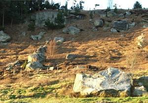 Boulder field.