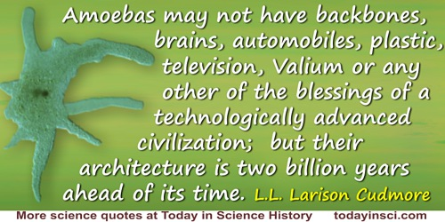 L.L. Larison Cudmore quote: Ah, the architecture of this world. Amoebas may not have backbones, brains, automobiles, plastic, te