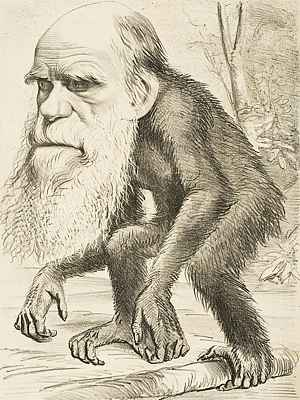 Editorial cartoon of Charles Darwin, with long white beard, depicted with the body of an ape