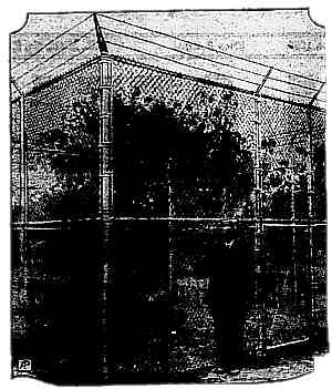 Photo of peach tree surrounded by chain link fence twice as high as James Markham standing in front of it. Image is very dark.