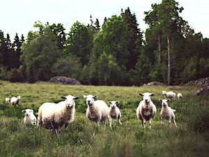 Photo of sheep in forest meadow - by Unsplash CC0