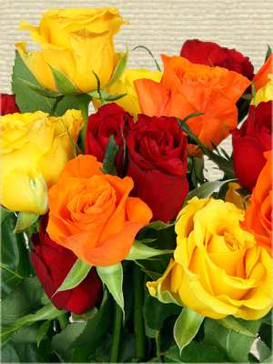 Bouquet of roses, red yellow and orange.