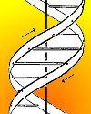 Thumbnail - DNA double helix