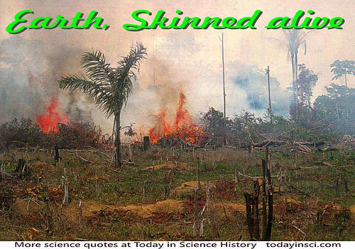 Deforestation photo of burning brush and timber on the ground + quote caption �Earth skinned alive�