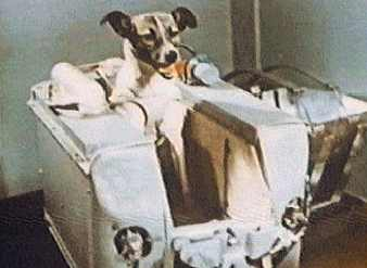 first animal in space laika - photo #25