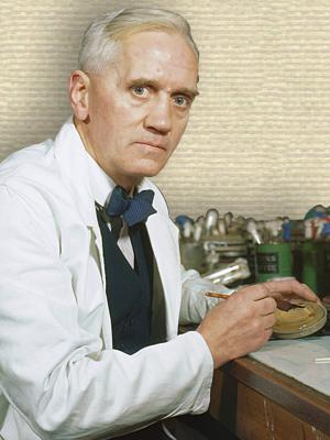 Photo of Alexander Fleming upper body facing front, seated at lab bench, hands on bench holding petri dish and scalpel