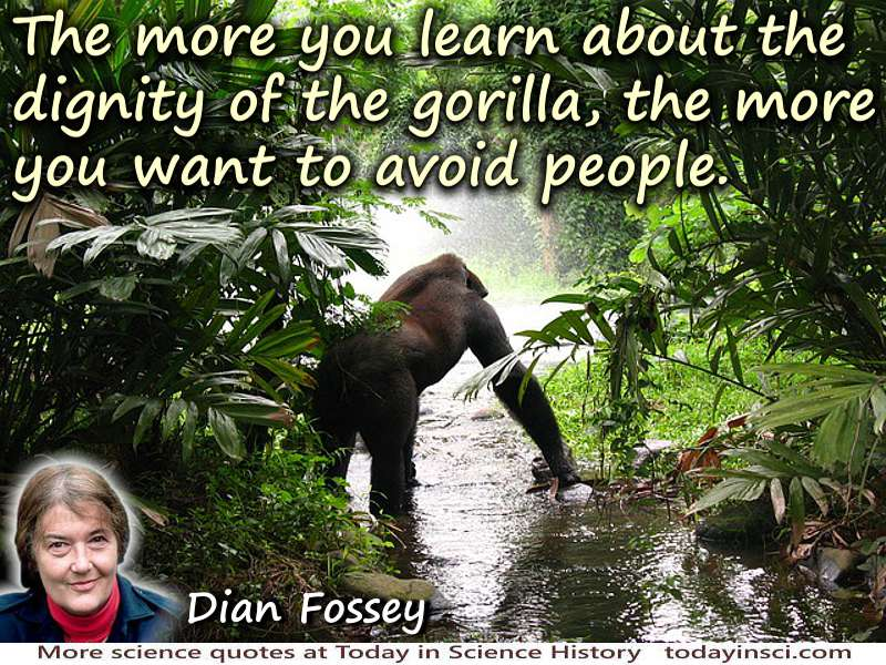 Dian Fossey Quote The Dignity Of The Gorilla Medium Image 500 X 350 Px