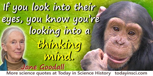 Jane Goodall quote: If you look into their [chimpanzees] eyes, you know you're looking into a thinking mind. They teach us that