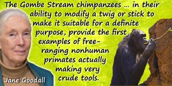 Jane Goodall quote: The Gombe Stream chimpanzees … in their ability to modify a twig or stick to make it suitable for a definite