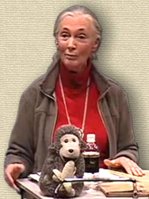 Jane Goodall speaking at a TED talk, upper body. A toy chimpanzee is on the podium.