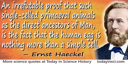 Ernst Haeckel quote: The ancestors of the higher animals must be regarded as one-celled beings, similar to the Amœbæ which at th