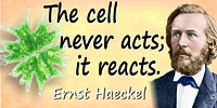 Ernst Haeckel quote: The cell never acts; it reacts.