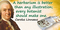 Carolus Linnaeus quote: A herbarium is better than any illustration; every botanist should make one.
