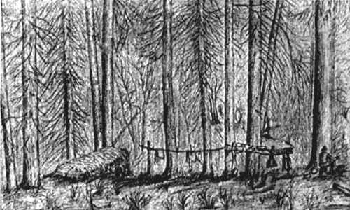 Pencil sketch showing camp in pine trees, a straw bed and clothes or supplies hanging on a horizontal pole lashed between posts