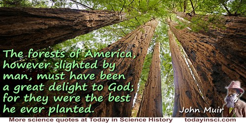 John Muir quote: The forests of America, however slighted by man, must have been a great delight to God; for they were the best
