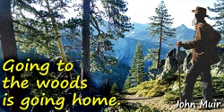 John Muir quote: Going to the woods is going home.
