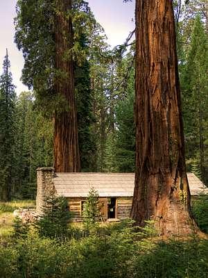 Photo of cabin among giant sequoias by Vicente Villamón CC 2.0