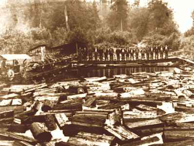 Photo of a mill lake showing cut lengths of raw timber logs ready to process