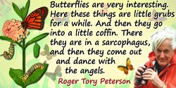 Roger Tory Peterson quote: Butterflies are very interesting. Here these things are little grubs for a while. And then they go in