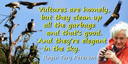 Roger Tory Peterson quote: Vultures are homely, but they clean up all the garbage and that's good. And they're elegant in the sk
