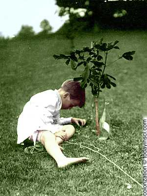 Photo Theodore Roosevelt's young son, Quentin, sitting on lawn beside a short sapling