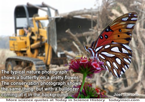 Conservation photo montage of butterfly on a flower foreground with bulldozer very close behind clearing ground approaching it