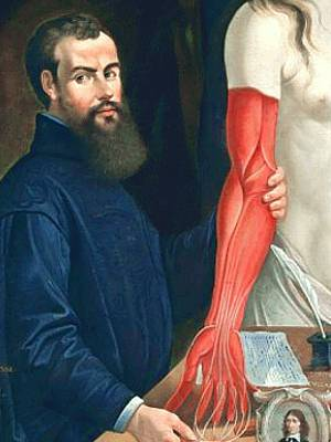 Painting of Andreas Vesalius, upper body, standing at table with dissected arm muscles of a body