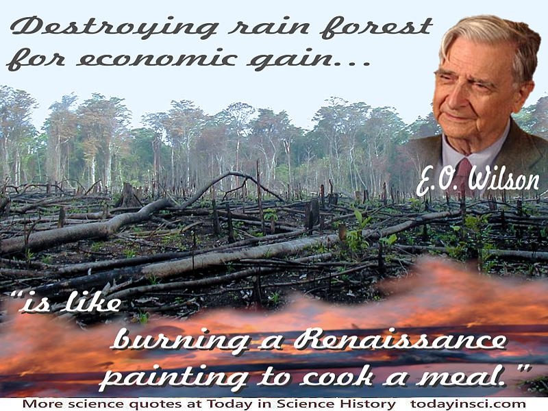 Burned deforestation photo+quote Destroying rain forest for economic gain is like burning a Renaissance painting to cook a meal